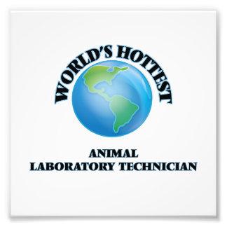 El técnico del laboratorio animal más caliente del fotografía