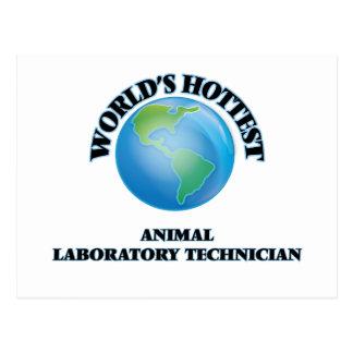 El técnico del laboratorio animal más caliente del postales