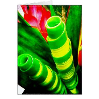El Ti torcido tropical sale de la tarjeta de felic