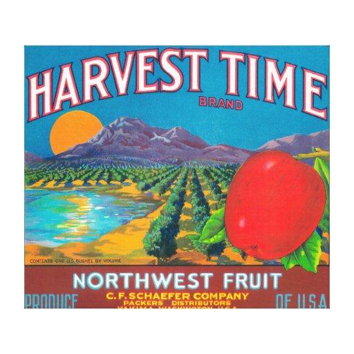 El tiempo de cosecha Apple etiqueta - Yakima, WA Impresion De Lienzo