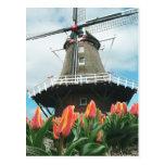 El tiempo del tulipán de Holanda florece el molino Postal