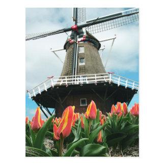 El tiempo del tulipán de Holanda florece el molino Tarjetas Postales