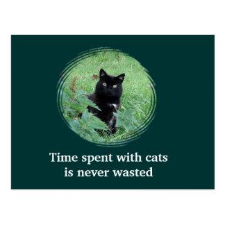 El tiempo pasado con los gatos nunca es postal per