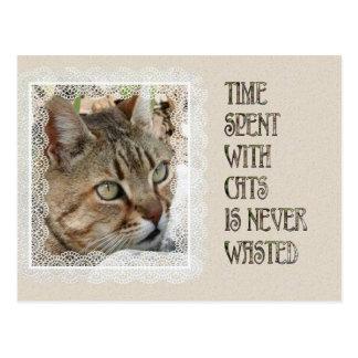 El tiempo pasado con los gatos nunca se pierde tarjetas postales