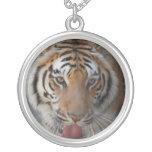El tigre besa el collar