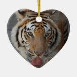 El tigre besa el ornamento ornato