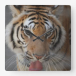 El tigre besa el reloj de pared