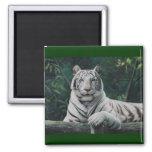 el tigre blanco imán de frigorífico