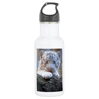 El tigre Cub blanco es lamedura de la pata buena