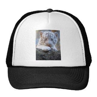El tigre Cub blanco es lamedura de la pata buena Gorras De Camionero