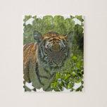 El tigre Cub joven desconcierta Rompecabezas Con Fotos