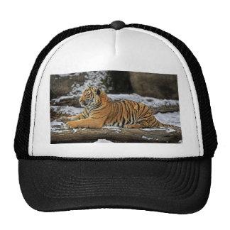 El tigre Cub perfila el casquillo de la bola Gorra