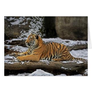 El tigre Cub perfila la tarjeta del día de fiesta