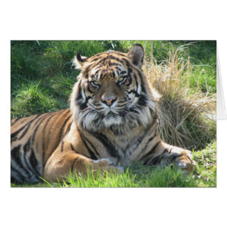 El tigre de Helaine Tarjetón
