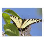 El tigre del este Swallowtail toma vuelo Tarjetón