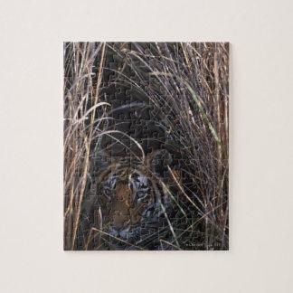 El tigre descansa en hierba alta puzzle con fotos