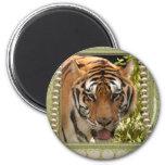 El tigre Día-Blanco de St Patrick Iman Para Frigorífico
