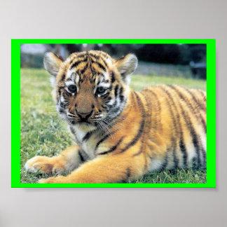 El Tigre ( In English: The Tiger) Poster