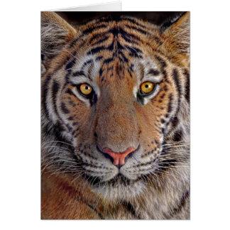 El tigre mira fijamente abajo tarjeta de felicitación