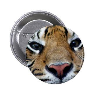 El tigre observa el botón pin redondo de 2 pulgadas