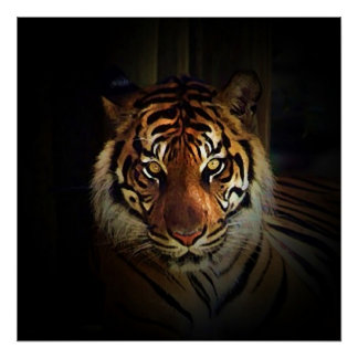 El tigre observa el poster - impresiones salvajes