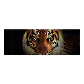 El tigre observa el poster - posters salvajes de l