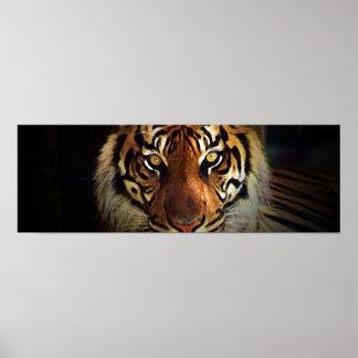 El tigre observa el poster - posters salvajes de l póster