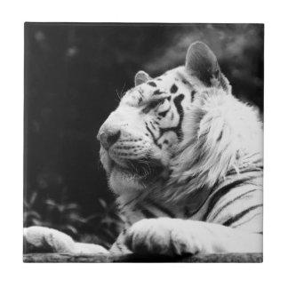 El tigre raya destino del gato del animal salvaje azulejo