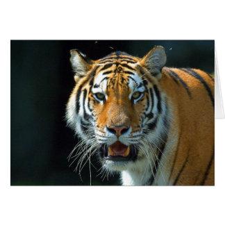 El tigre siberiano tarjetón