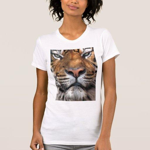 El tigre top