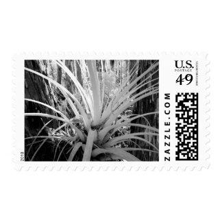 El tillandsia epifito es común en la Florida, Estampillas
