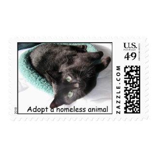 El tipo de la sol, adopta un animal sin hogar sellos