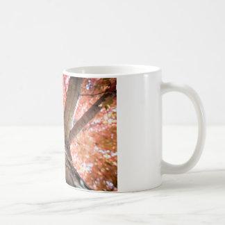 El toldo sobre mí taza