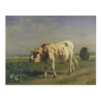 El toro blanco por Troyon constante Postales