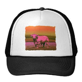 El toro trucker hat