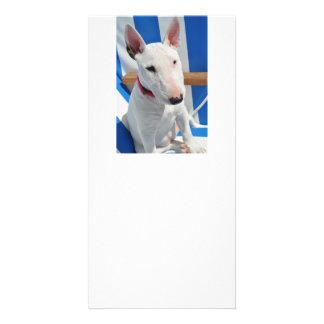 el toro-Terrier-sentarse Tarjetas Con Fotos Personalizadas
