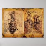 El torso de la mujer/corazón y sus vasos sanguíneo impresiones