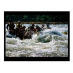 El transportar en balsa del agua blanca tarjetas postales