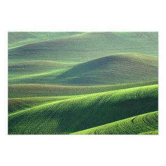 El trigo se origina en las colinas del Palouse Cojinete
