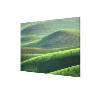 El trigo se origina en las colinas del Palouse Lienzo Envuelto Para Galerías