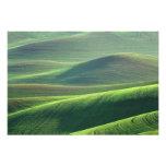 El trigo se origina en las colinas del Palouse Arte Fotografico