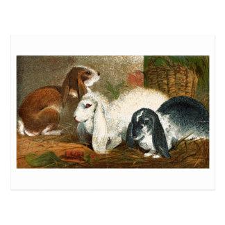 El trío del conejo tarjetas postales