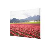 El tulipán alegre coloca el valle de Skagit de la  Impresion En Lona