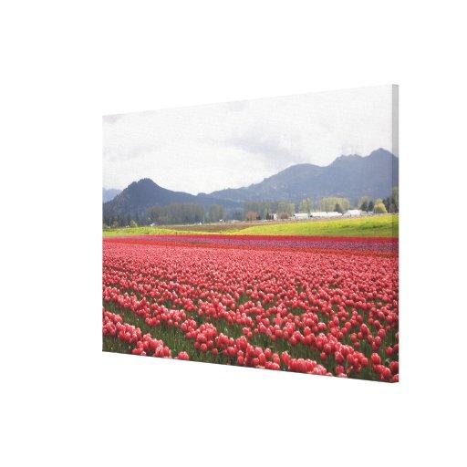 El tulipán alegre coloca el valle de Skagit de la  Lona Estirada Galerías