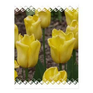 El tulipán amarillo florece la postal