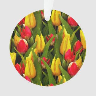 El tulipán amarillo rojo florece el modelo de la f