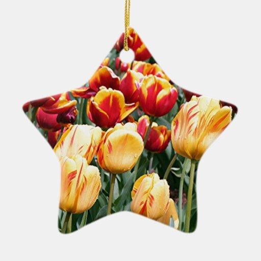 El tulipán amarillo y rojo florece en la floración adornos de navidad