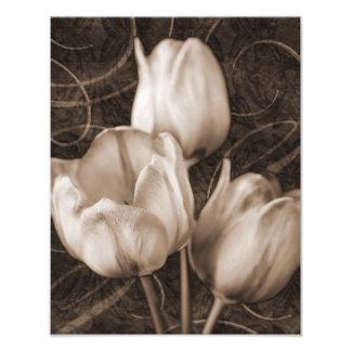El tulipán blanco florece el fondo negro de la fotografías