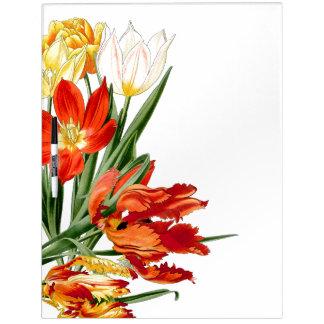 El tulipán botánico del loro florece al tablero tablero blanco