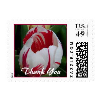 El tulipán de la raya del caramelo le agradece franqueo